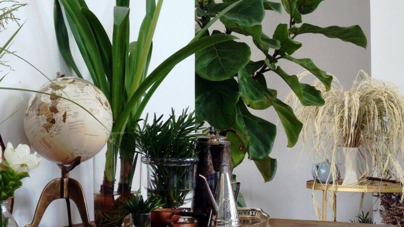 plant interior design