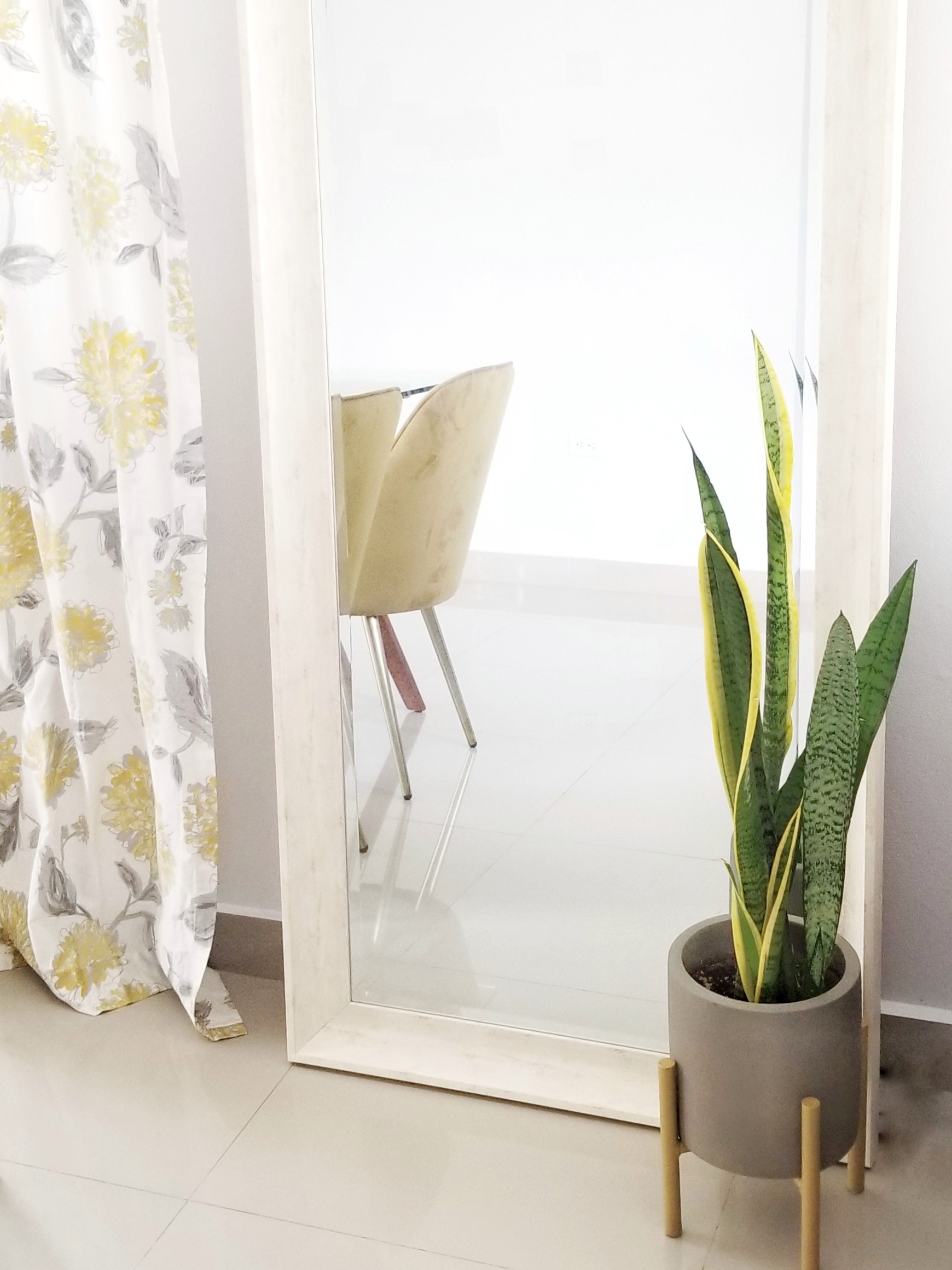 Snake Plant with a chair in the background